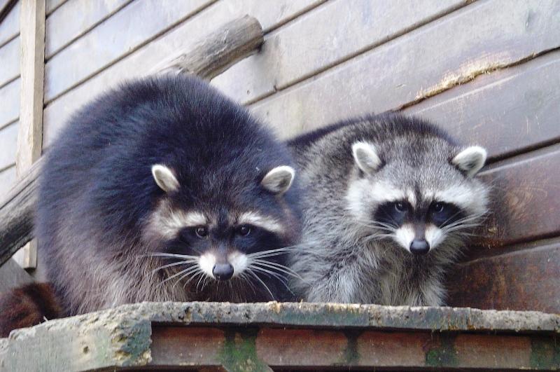 X3 Tierpark Landurlaub In Sachsen Ev Urlaub Auf Dem Lande In